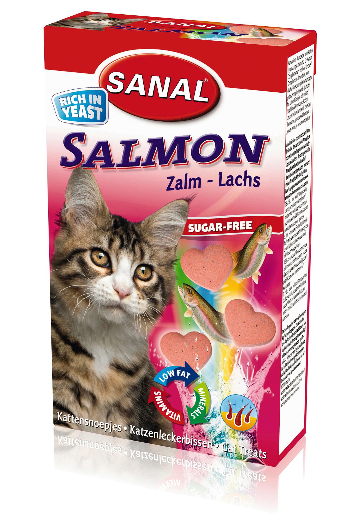 kattenvoeding