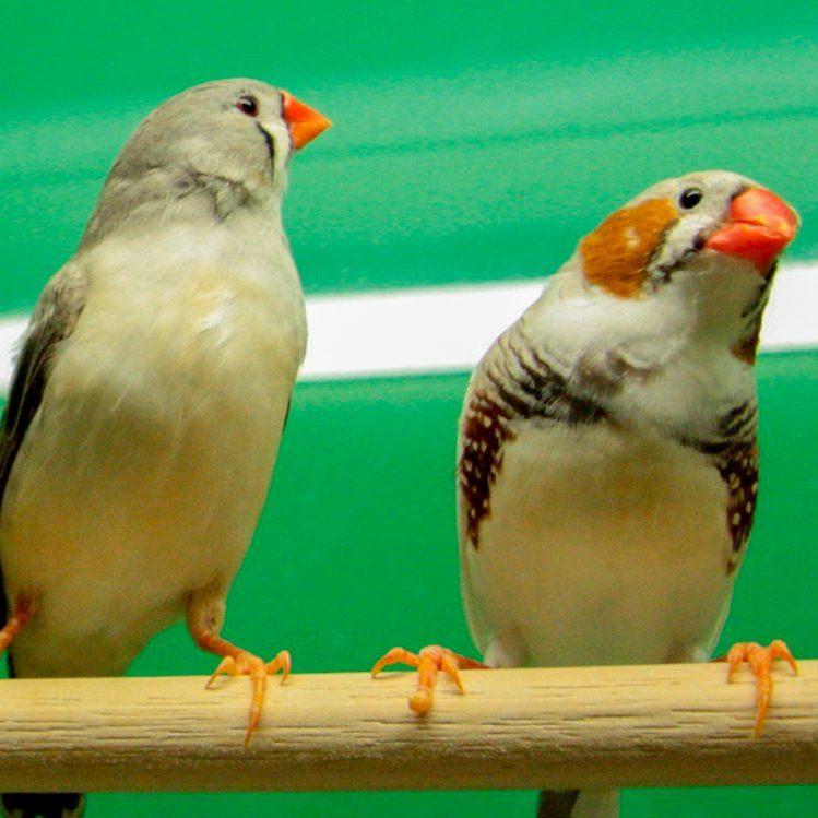 vogels assortiment